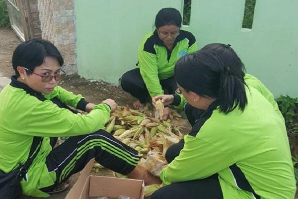 Ibu-Ibu membersihakn kulit jagung yang baru dipanen di kebun PKK Kabupaten Sekadau