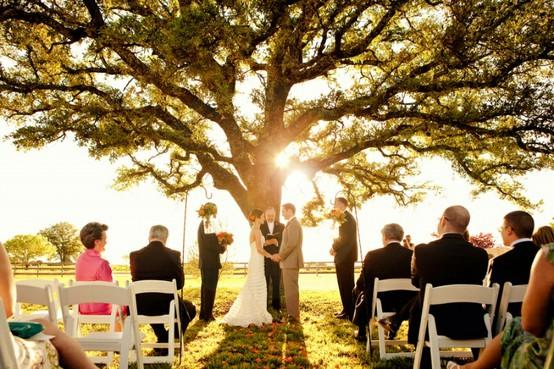 Honey Buy Wedding Under A Tree