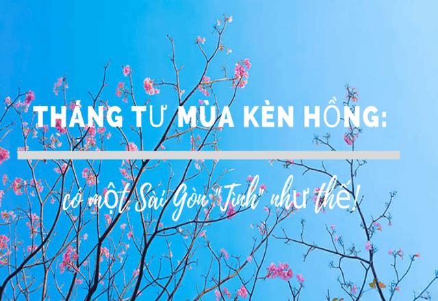 Có một Sài Gòn mộng mơ mùa hoa kèn hồng nở rộ - Ảnh 1