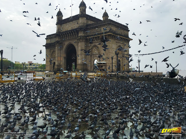 A monsoon morning at the Gateway of India with a lot of pigeons