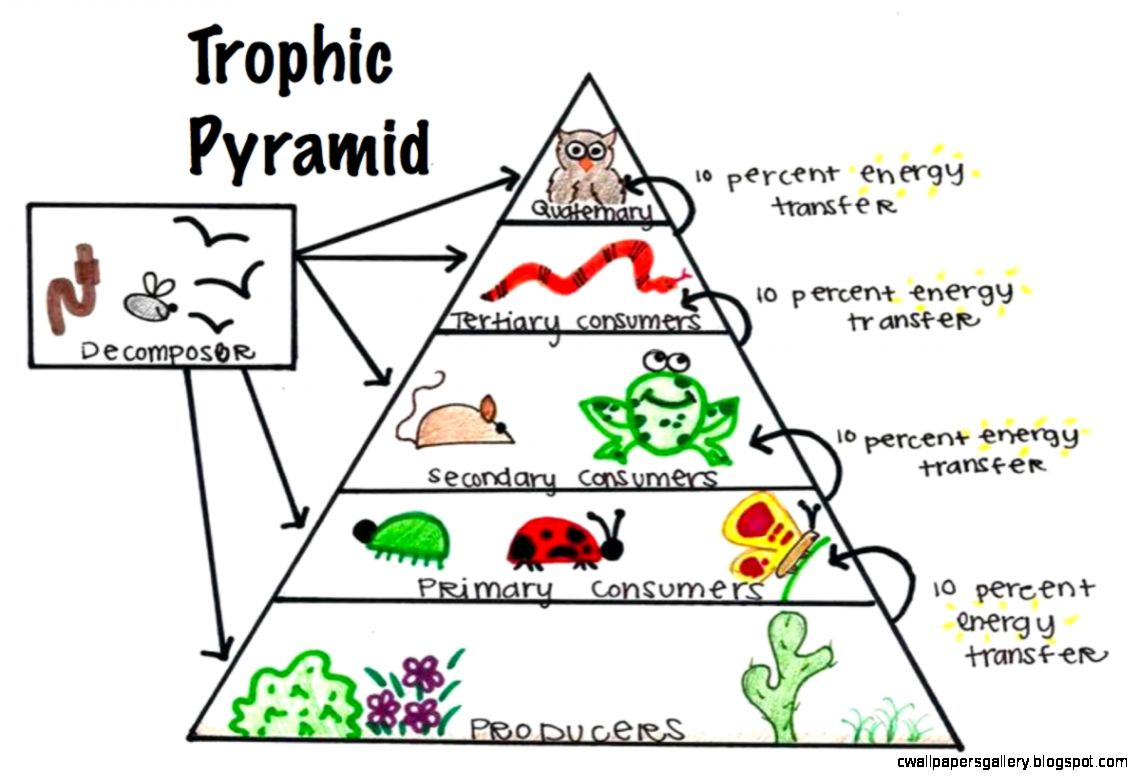 Tropical Rainforest Food Web Decomposers