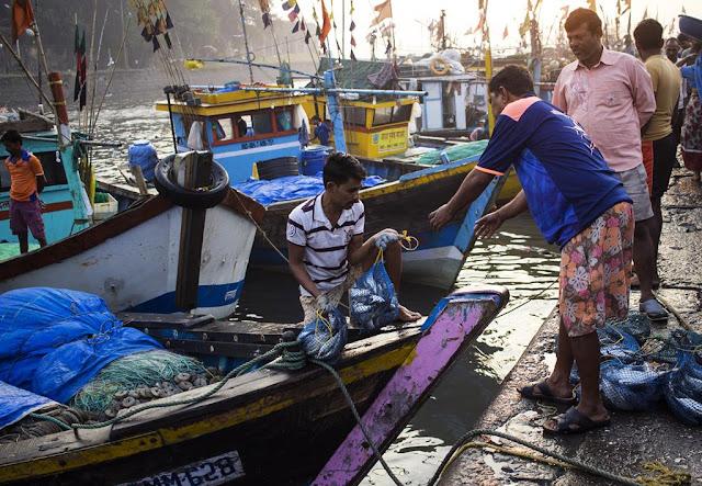 fish, boat, fishermen, trade, deal, edge, sassoon docks, arabian sea, mumbai, india,