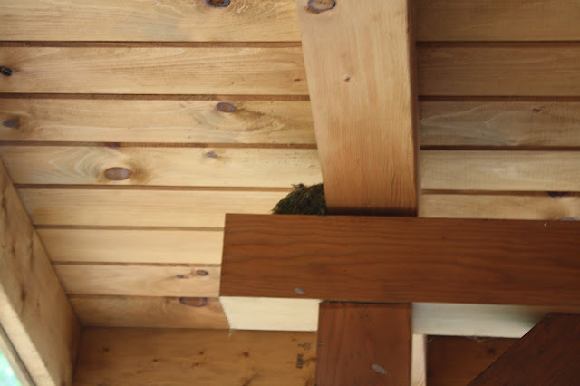 Bird nest in cabin in Ohio