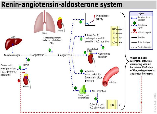 Interaksi Obat Antihipertensi (ACE-i vs Diuretik Hemat Kalium)