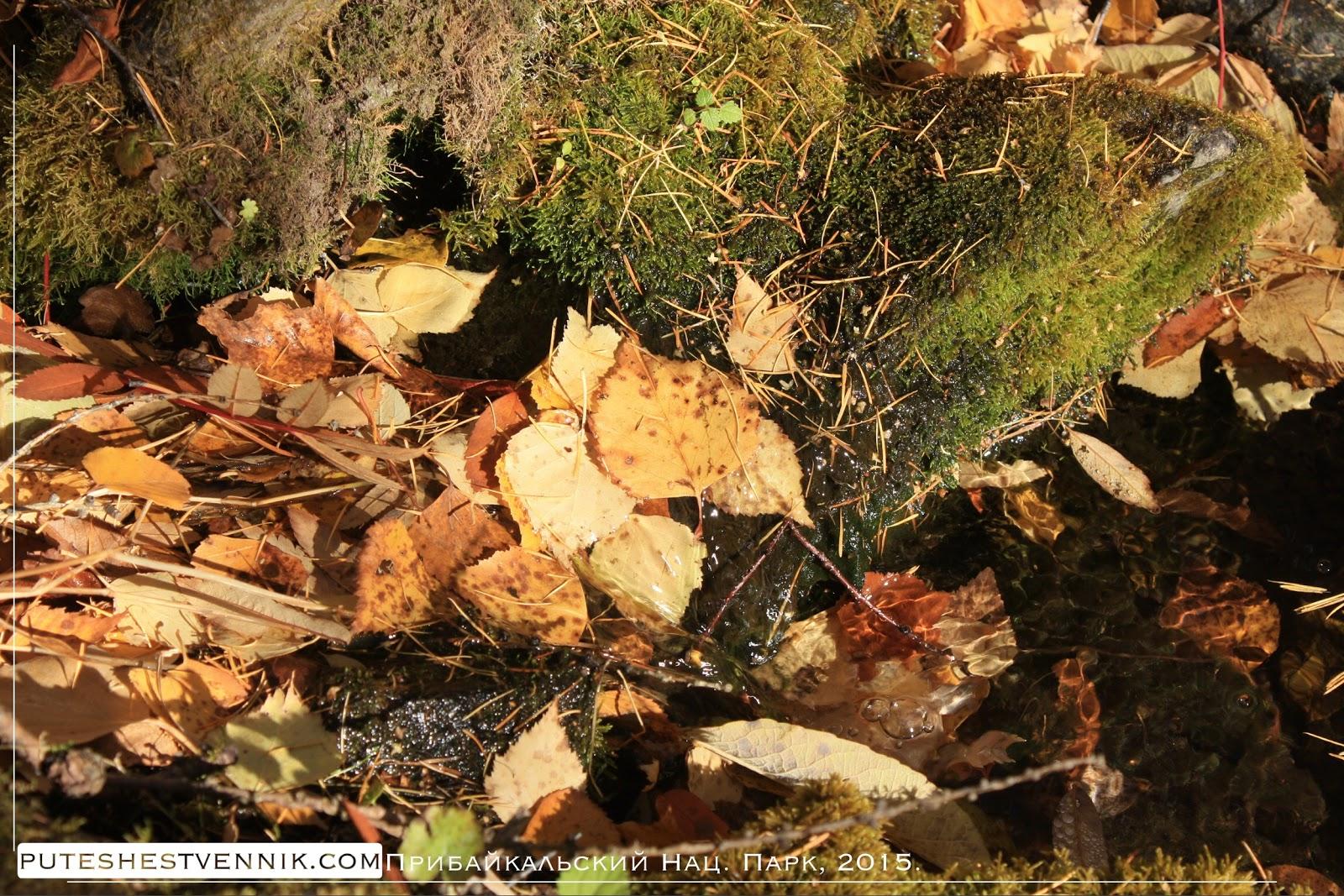 Камни и осенние листья в ручье