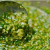 This Herb Alone Can Treat Kidney, Pancreas and Liver Issues In One Blow