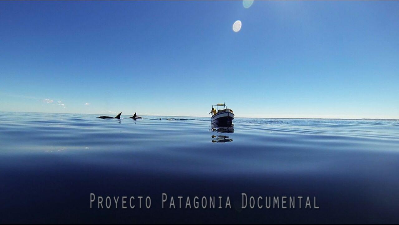 proyecto documental fotografico en Puerto Piramides fauna