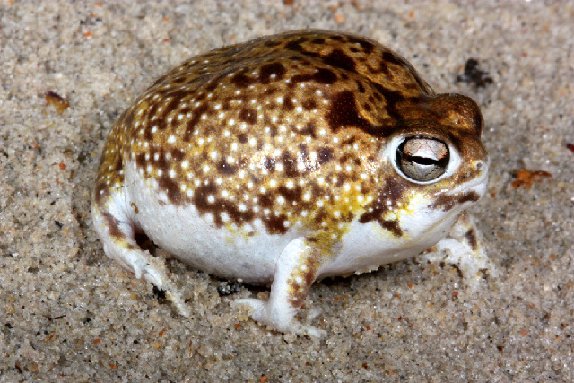 6 Of The Strangest Frogs On The Planet Fun Animals Wiki Videos