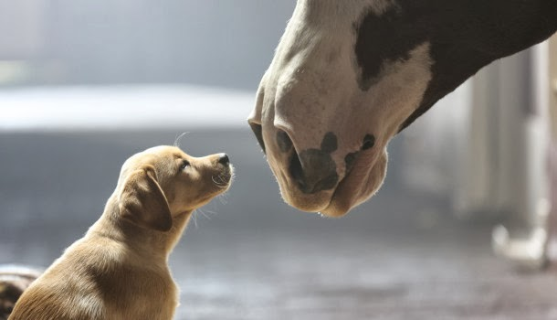 """Puppy Love"" Budweiser Super Bowl XLVIII Commercial"