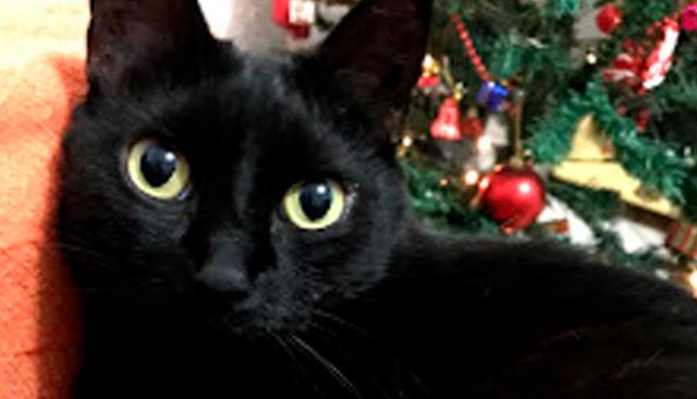 donnarita - luiznase - srmarido - literatura - gatos