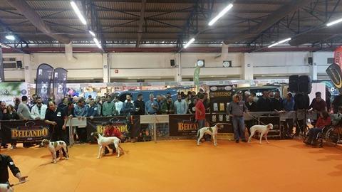 Επιτυχημένη η παρουσία του Κυνηγετικού Συλλόγου Σπάρτης στην Κυνηγεσία