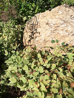 Decorative ground cover or weed? A second look by Vicki Barney