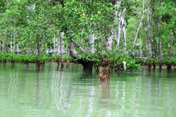 Save The Earth Hutan Bakau Sumber Resapan Karbon Terbesar For Us