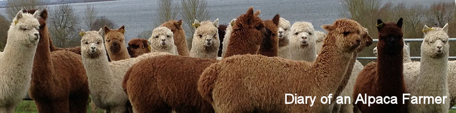Diary of an Alpaca Farmer