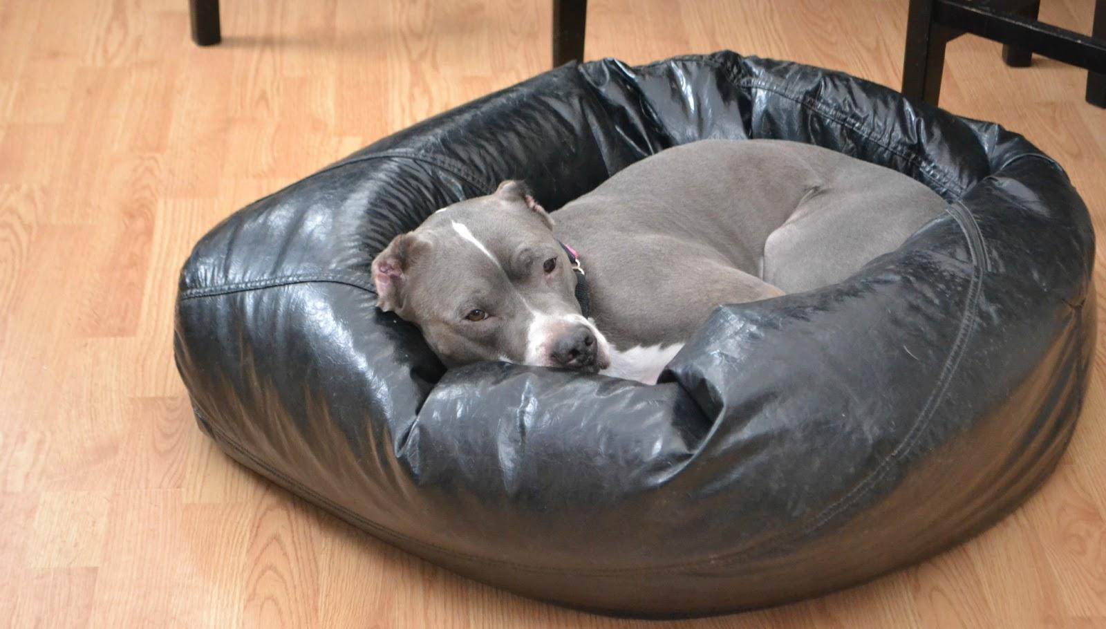 Admirable The Five Dog Blog Living Life Simply Messy Bean Bag Love Evergreenethics Interior Chair Design Evergreenethicsorg