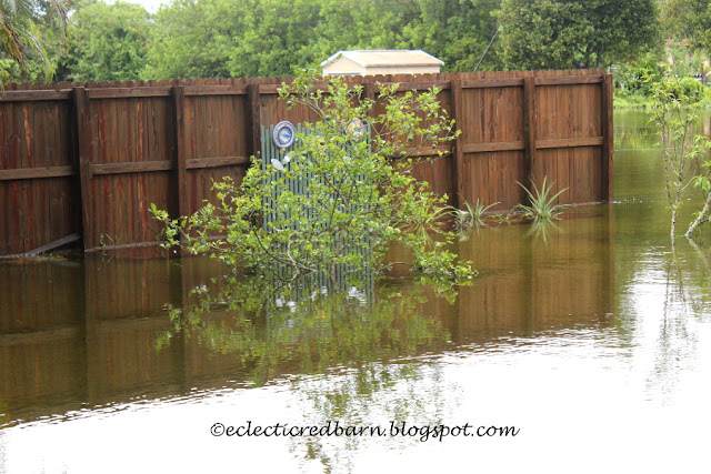 Eclectic Red Barn: Pineapple patch under water