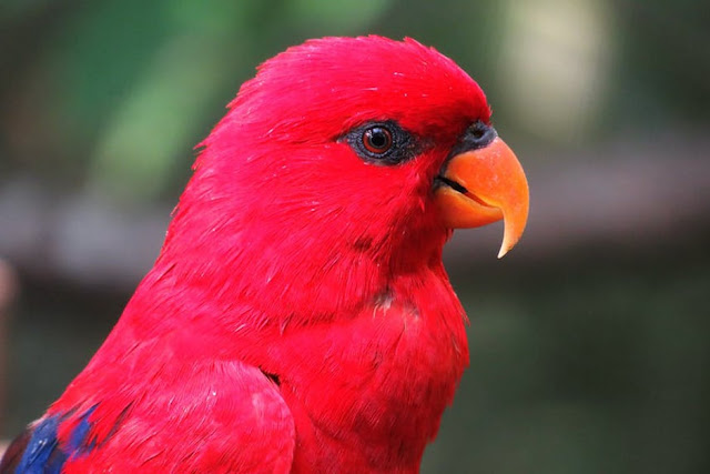 Top 10 Parrots Facts - Fun Parrot Facts for Kids