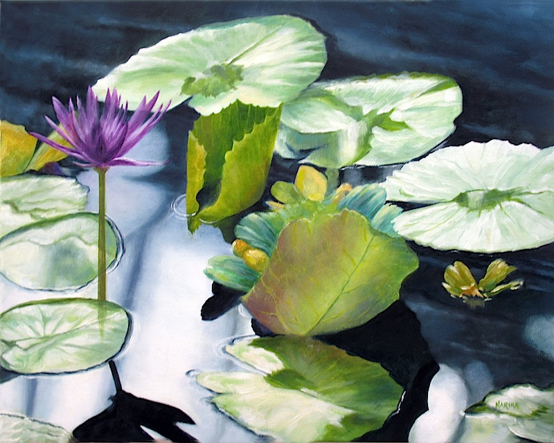 Water Lilies Near Me