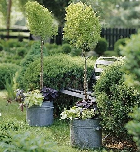 Гармония растений в саду