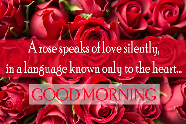 A rose speaks of love silently, in a language known only to the heart...Good Morning