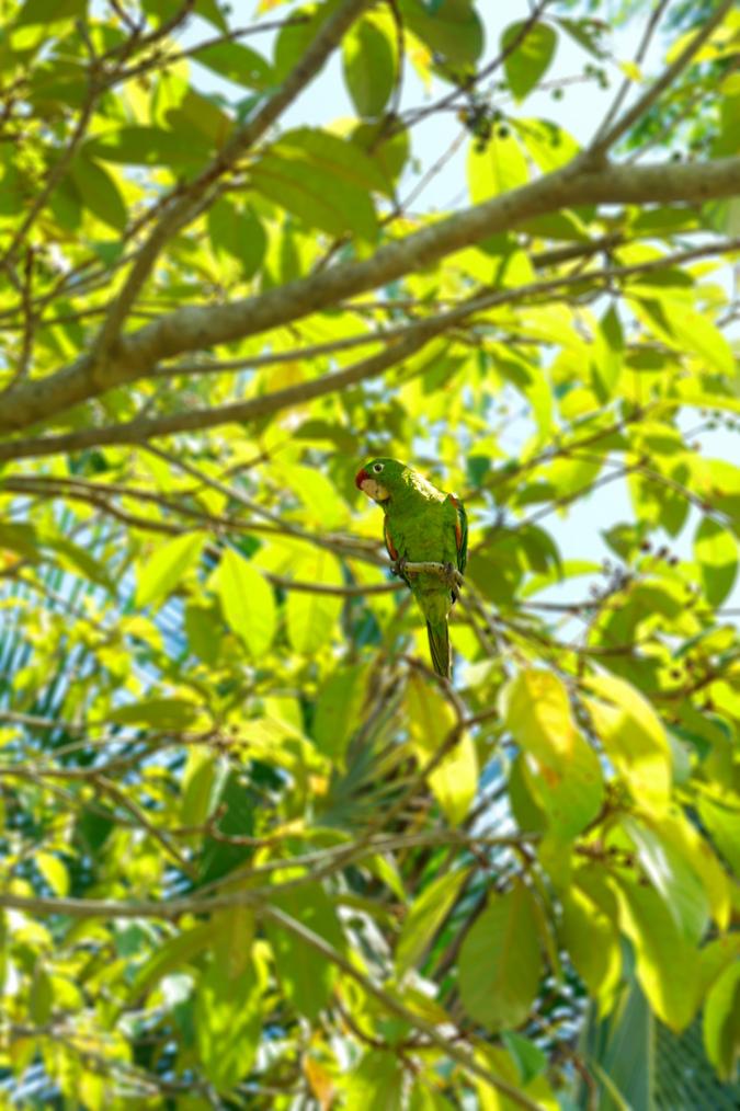 Bocas del Toro wildlife