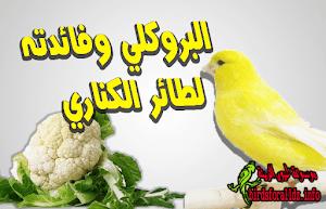 نصائح عن تغذية طائر الكناري السليمة موسوعة طيور الزينة