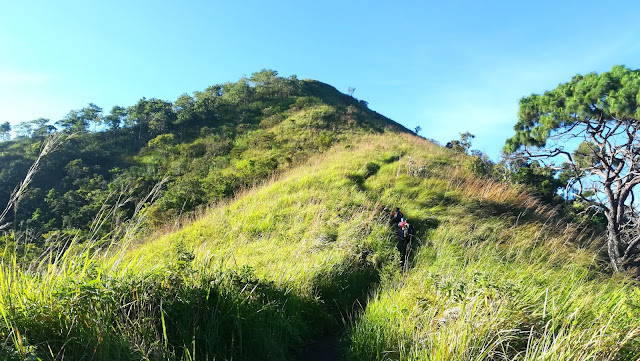 Trail towards the grassland of Mt. Batong Amat (Reverse-Traverse)