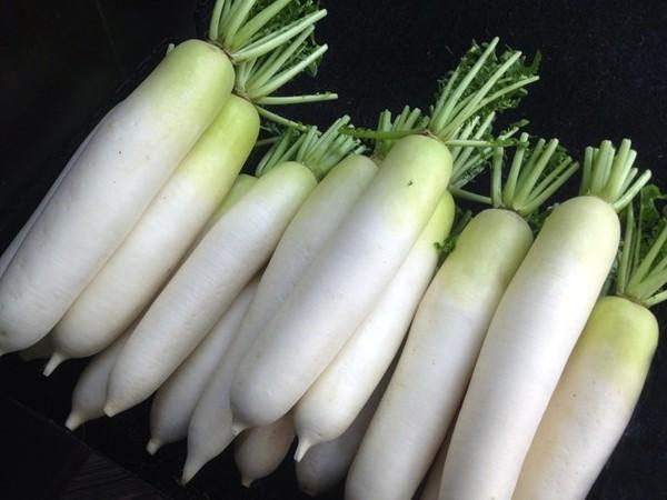 Manfaat lobak putih bagi kesehatan dan kecantikan 22 Manfaat Lobak Putih Untuk Kesehatan Dan Kecantikan