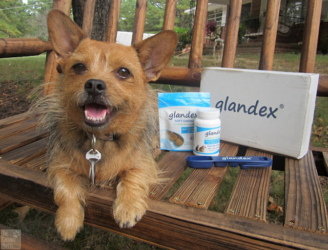 Jada and Glandex anal gland supplement products