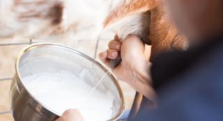 Το κατσικίσιο γάλα συμβάλλει στη θεραπεία του γαστρικού έλκους, της οστεοπόρωσης, της σιδηροπενίας και της αρτηριοσκλήρυνσης