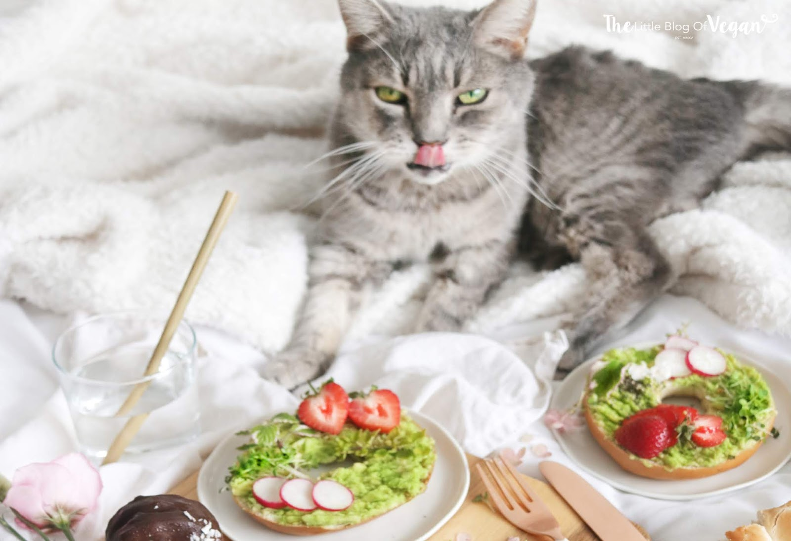 Date night with my cat & Avocado bagels recipe
