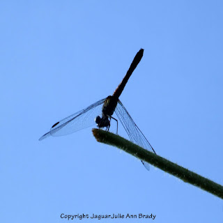 Dance of the Dragonfly step 8