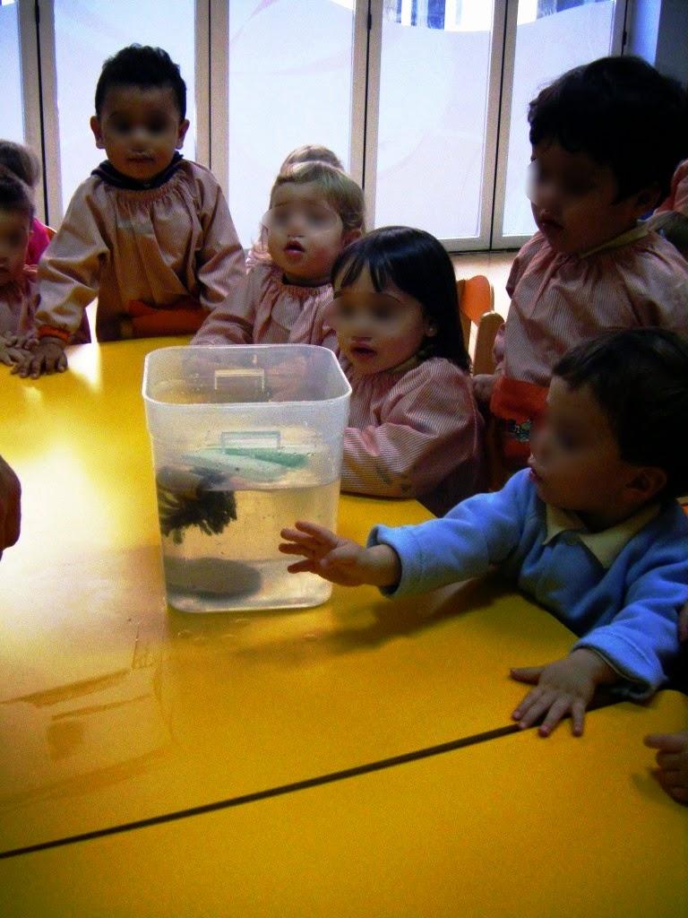 Semana de la ciencia en educación infantil