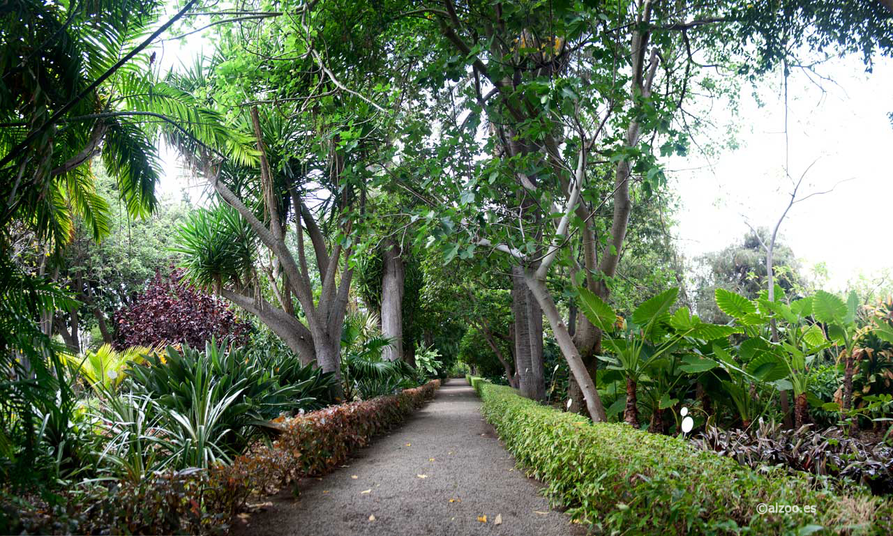 Naturaleza urbana - El botanico puerto de la cruz ...