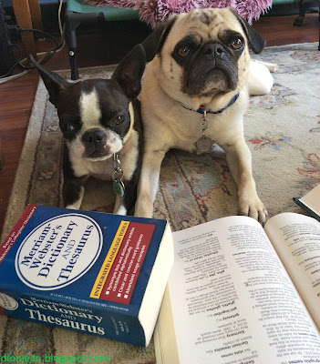 Pug and Boston terrier with reference books