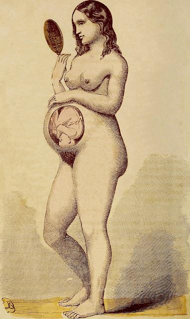Artista ignoto: Il bambino al nono mese della gravidanza