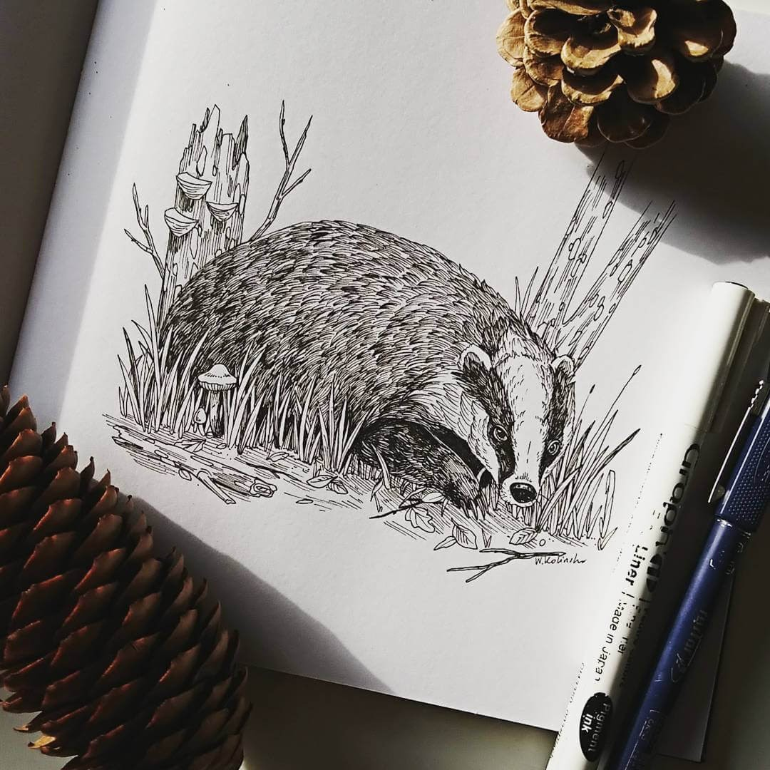 11-Badger-Weronika-Kolinska-Black-and-White-Animal-Ink-Drawings-www-designstack-co
