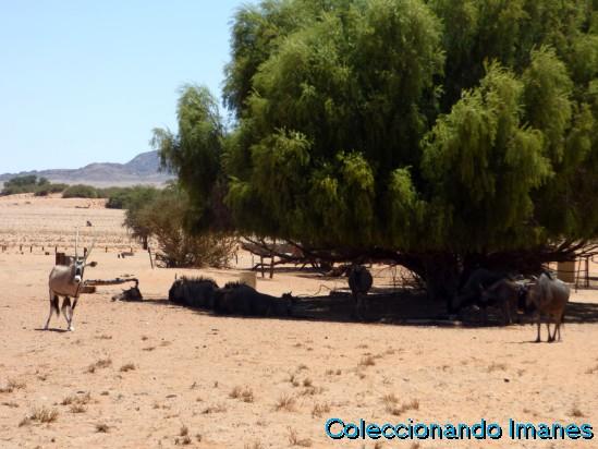 Deadvlei lago salado Namibia