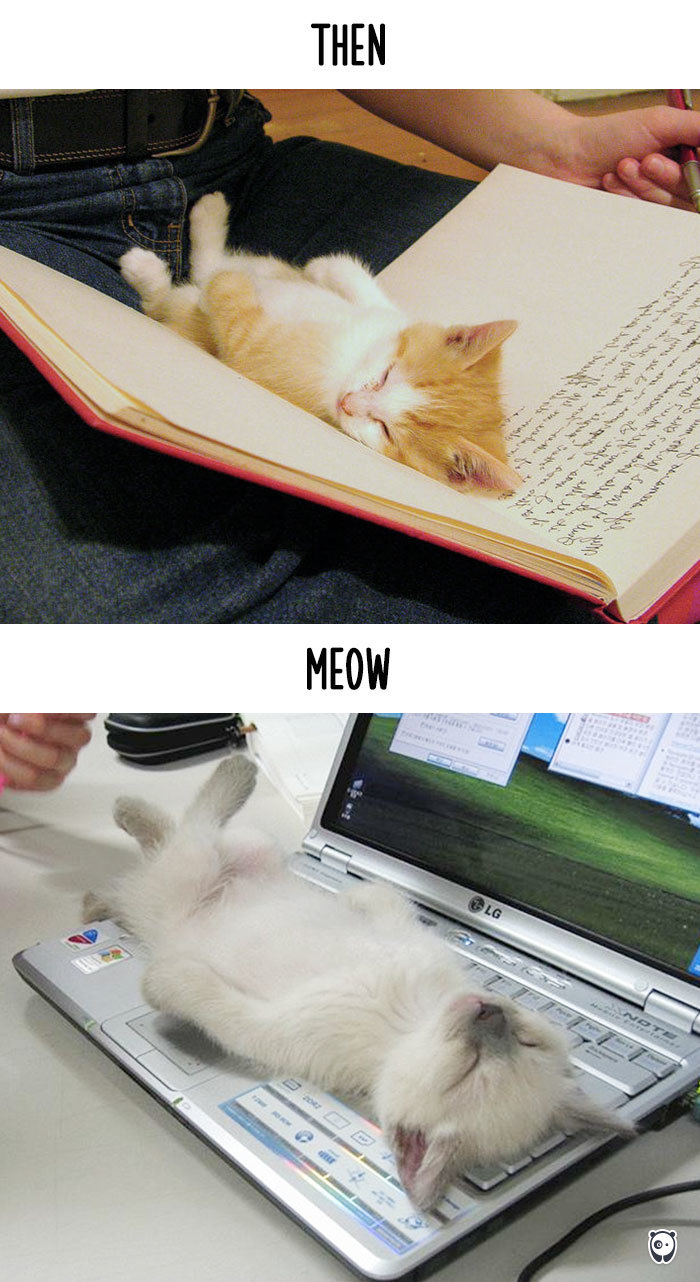 Then vs Meow How Technology Has Changed Cats' Lives (10+ Pics) - Intruding Human Personal Space