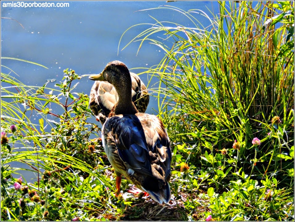Russell Orchards Farm Store & Winery: Patos