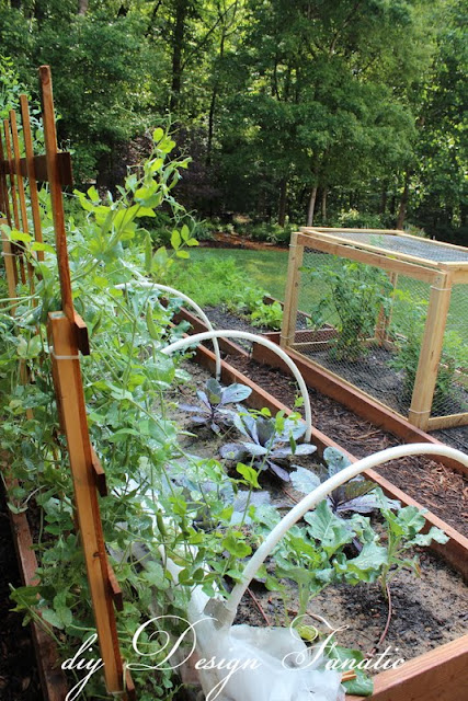raised beds, raised beds on a slope, vegetable garden, building project, diyDesignFanatic.com