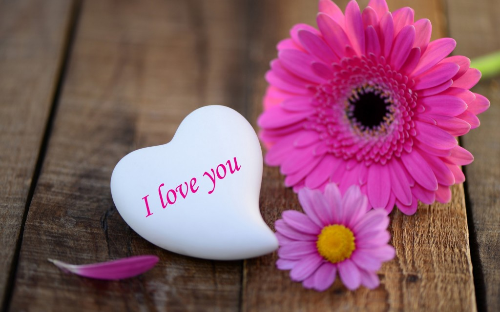 pink-daisies-heart-stone-i-love-you-wide-wallpaper-pink-daisies-heart-stone-i-love-you-wide-wallpaper-2560x1600