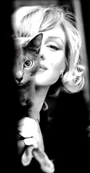 Marilyn Monroe cat