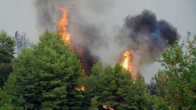 Έκθεση της Περιφέρειας για τις καταστροφές από την πυρκαγιά στην Ανατολική Μάνη