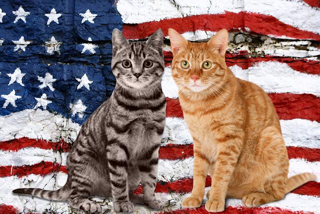Από τη γάτα των Ιμαλαΐων στα «γατάκια» του Λάνγκλεϊ…