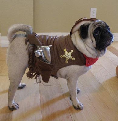 Is It Halloween? #ilovemydog #instapuppy #dogstagram #lovedogs #lovepuppies #pets #puppy #adorable #puppies #mypets #mydog