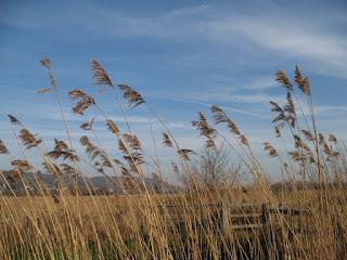 หญ้าที่ใช้มุงหลังคา