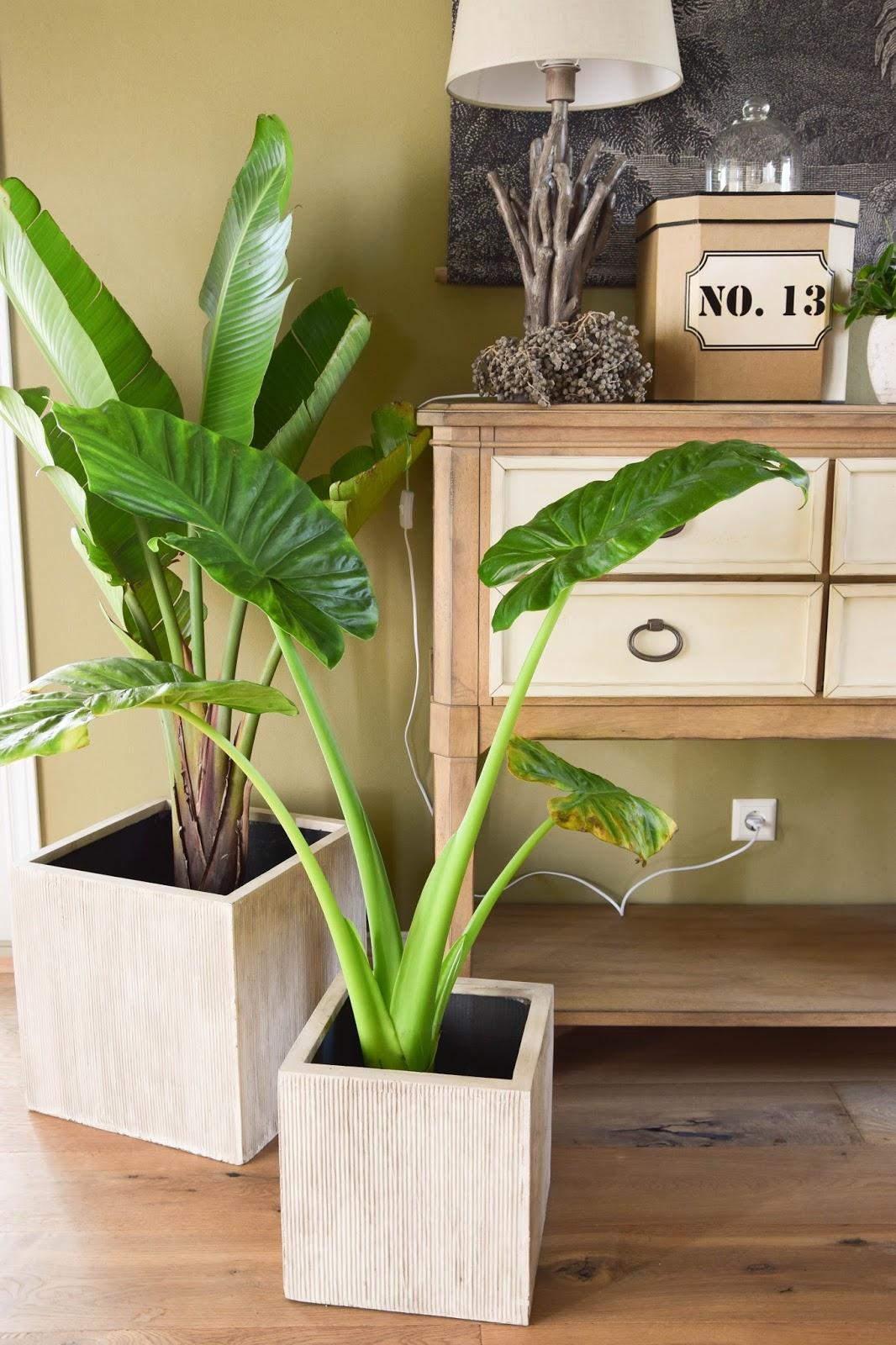 Botanical Style Und Neue Deko Fürs Wohnzimmer Mit Übertöpfen Von VIVANNO.  Dekoideen, Deko,