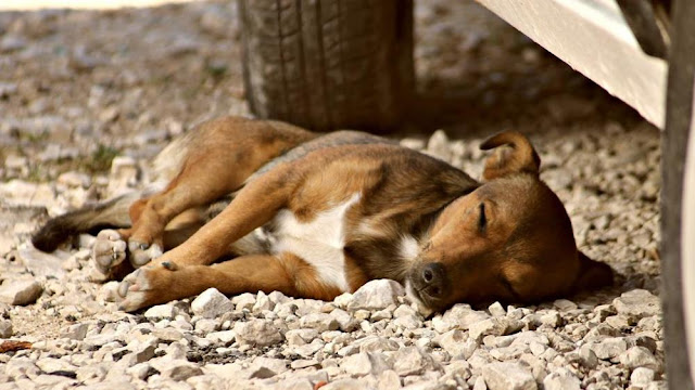 Buongiornolink  Sicilia una trentina di cani avvelenati, animalisti in allarme e il sindaco minacciato di morte