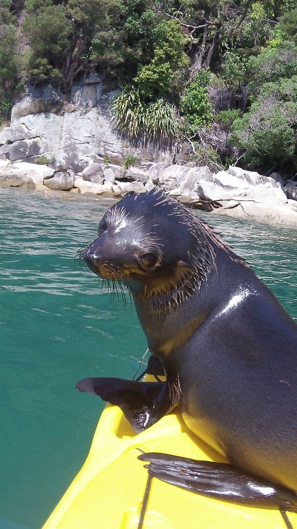 40 Heartwarming Pictures Of Animals - This Little Guy Jumped Onto My Kayak In New Zealand